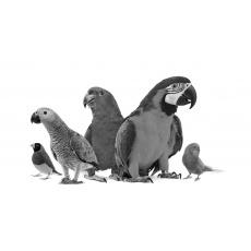 Voliéry, klietky, prepravky a potreby pre vtáctvo