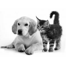 Psy a mačky